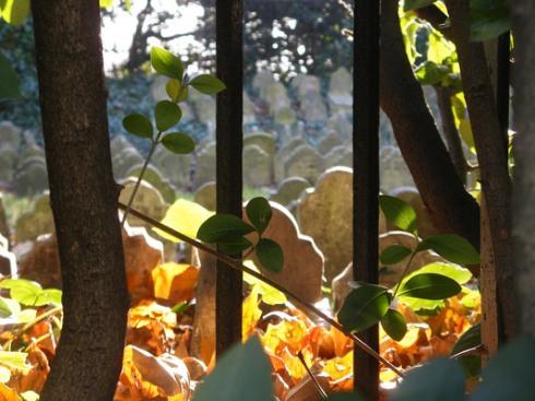 cemiterio de pets4